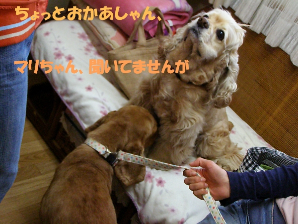 b0067012_223026.jpg