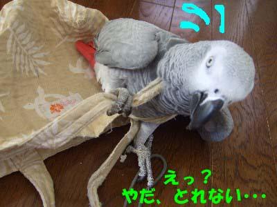 c0133013_1395651.jpg