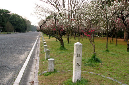 京都御苑 桃花_e0048413_22593717.jpg
