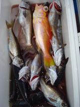 2009年3月13日 金曜日 フラッシャーサビキ五目~泳がせ五目船_f0031613_2024318.jpg