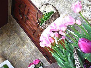 春、色めき立つ_c0116714_11144567.jpg
