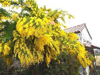 春、色めき立つ_c0116714_8411743.jpg