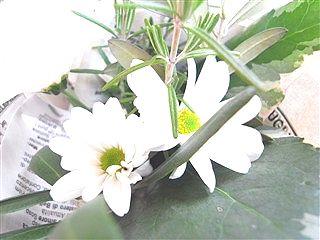 春、色めき立つ_c0116714_8413511.jpg