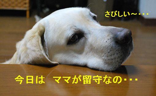 f0183814_7395712.jpg