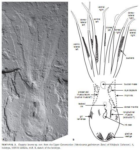 ありそうもない化石が掘り出された_c0025115_20594228.jpg
