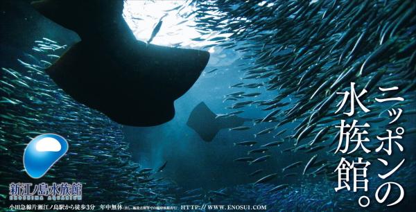 環境応援団いっぽ 新江ノ島水族館との協働へ_c0067646_1226795.jpg