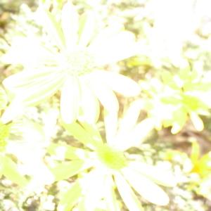 f0172960_0362146.jpg