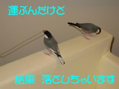 b0158061_20474124.jpg