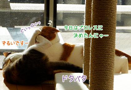 a0119470_1181841.jpg