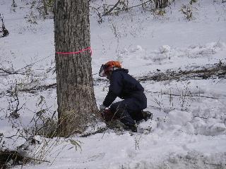 森の木で家を支える 伐倒シーン 続き_f0105112_18493159.jpg