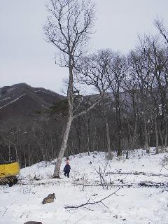 森の木で家を支える 伐倒シーン 続き_f0105112_18503556.jpg