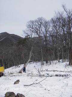 森の木で家を支える 伐倒シーン 続き_f0105112_18512126.jpg