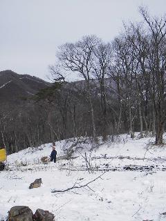 森の木で家を支える 伐倒シーン 続き_f0105112_18515558.jpg