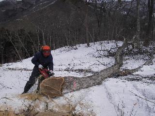 森の木で家を支える 伐倒シーン 続き_f0105112_18524318.jpg