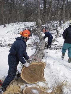 森の木で家を支える 伐倒シーン 続き_f0105112_18534814.jpg