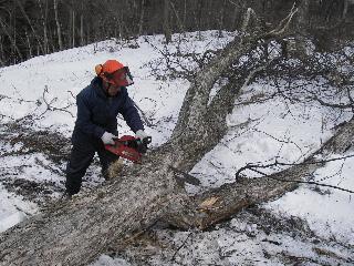 森の木で家を支える 伐倒シーン 続き_f0105112_18551318.jpg
