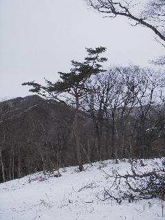 森の木で家を支える 伐倒シーン 続き_f0105112_1857453.jpg