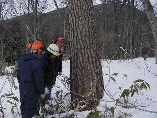 森の木で家を支える 伐倒シーン 続き_f0105112_18582638.jpg