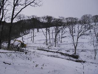 森の木で家を支える 伐倒シーン 続き_f0105112_1925157.jpg