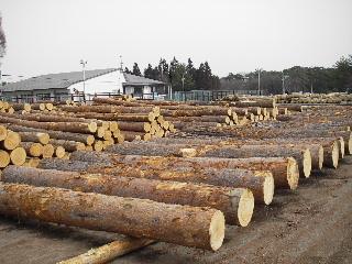 森の木で家を支える 伐倒シーン 続き_f0105112_1937152.jpg