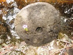 石に花飾り_a0043520_22311881.jpg