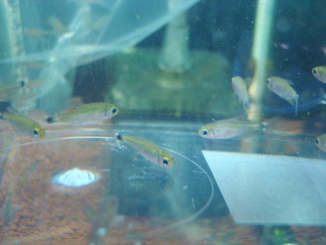熱帯魚・水草_f0189122_17152055.jpg