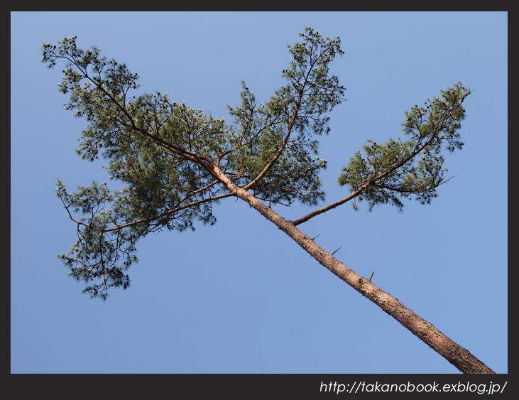 tree_f0193425_0151581.jpg