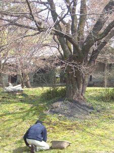 養源院の桜その1_e0153039_1342479.jpg