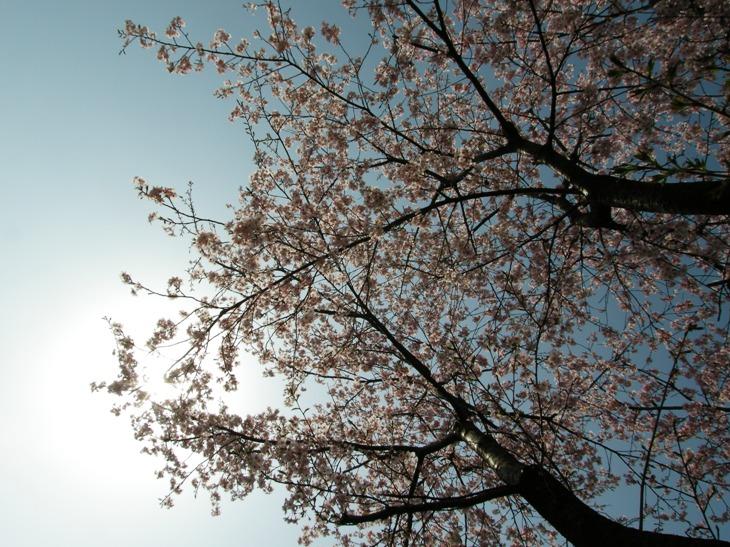 日本人であることの感謝_d0122640_17441583.jpg
