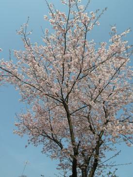 日本人であることの感謝_d0122640_1747239.jpg