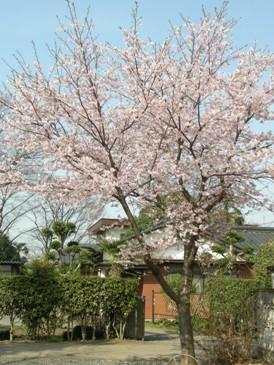 日本人であることの感謝_d0122640_1747946.jpg