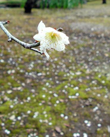 フォトギャラリー ♯11 春へ進む_e0071652_025324.jpg
