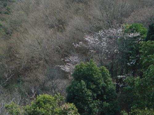 孝子の森の初春_c0108460_2115997.jpg