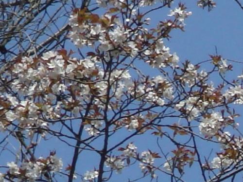 孝子の森の初春_c0108460_2116264.jpg