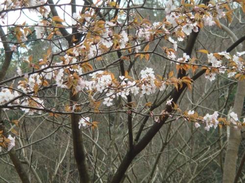 孝子の森の初春_c0108460_21163969.jpg