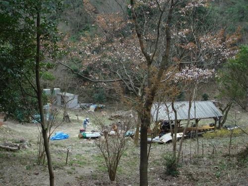 孝子の森の初春_c0108460_21165824.jpg