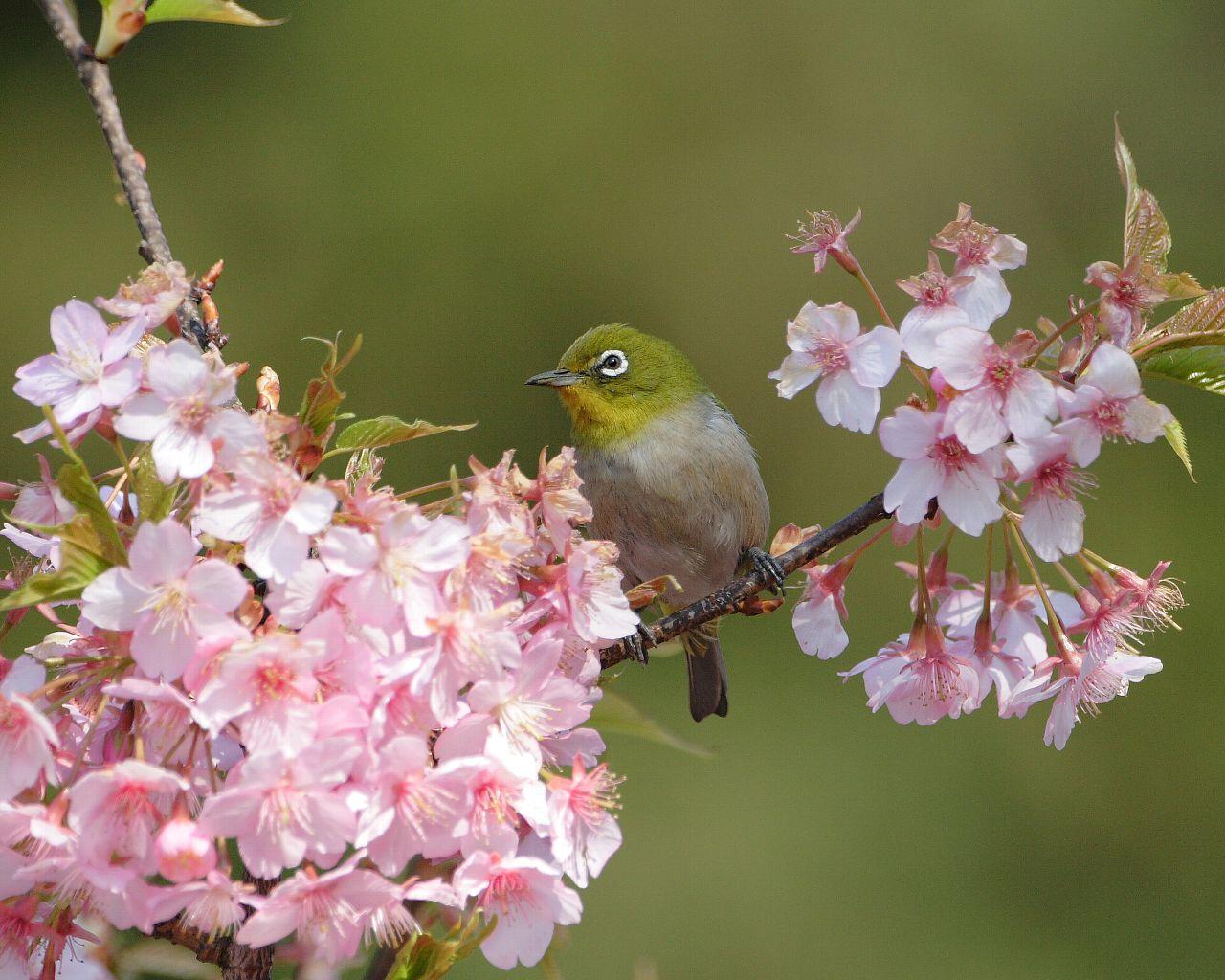 3連休で桜開花するかな?_f0105570_2233192.jpg