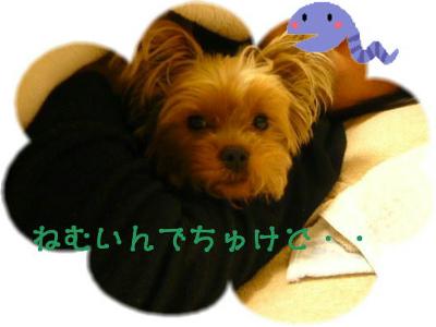 f0018384_201153.jpg