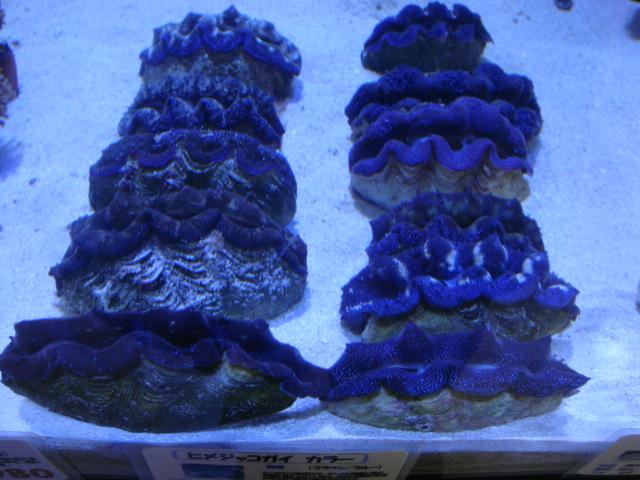 サンゴ用_f0189122_18104721.jpg
