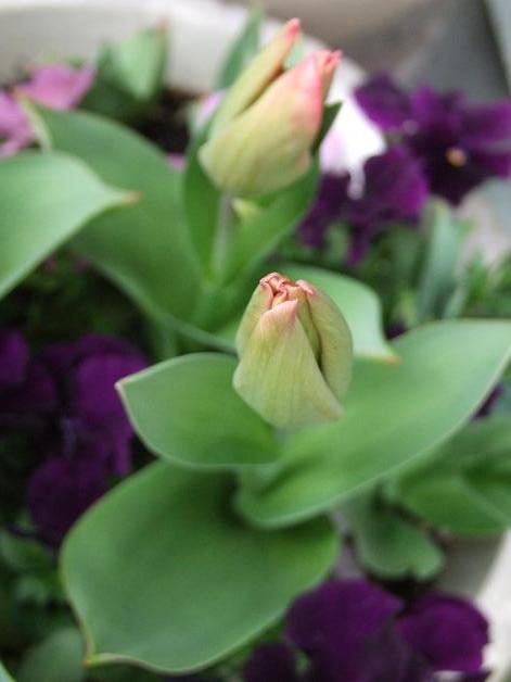 クルクル変わる、春の空、_b0089338_22424578.jpg