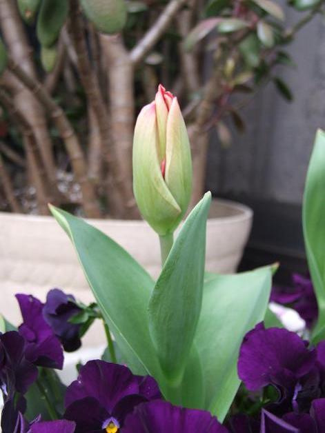 クルクル変わる、春の空、_b0089338_2242506.jpg