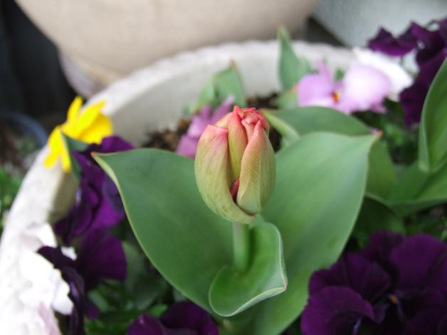 クルクル変わる、春の空、_b0089338_22425597.jpg