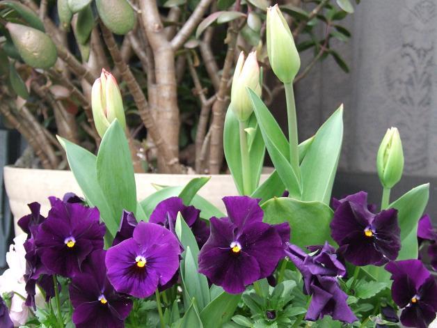 クルクル変わる、春の空、_b0089338_2243087.jpg