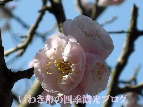 f0105342_1202951.jpg