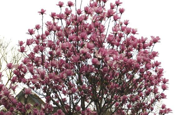 春の便り_b0093754_051092.jpg