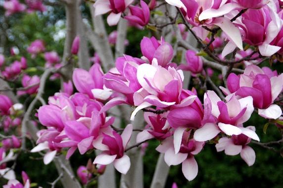 春の便り_b0093754_0514349.jpg