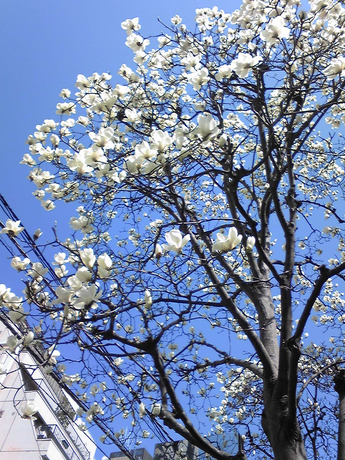 春な一日_d0082655_2281058.jpg