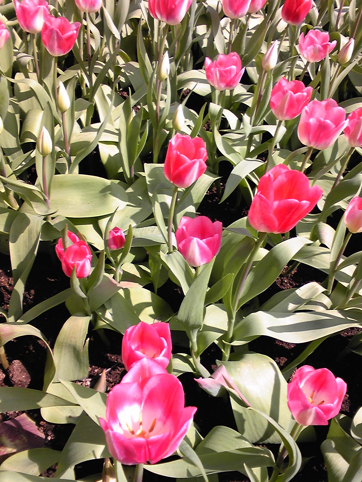 春な一日_d0082655_2291385.jpg