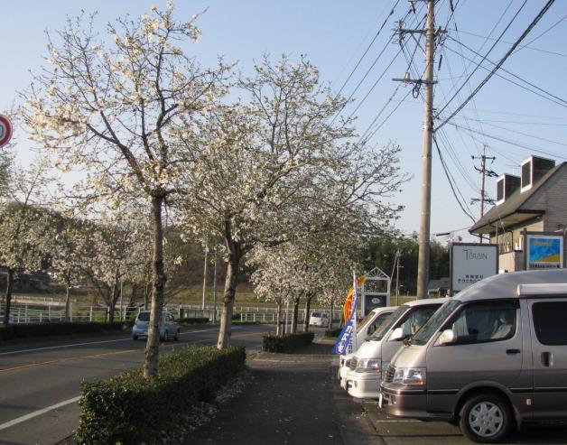 今日の風は春一番???_f0178858_18422939.jpg