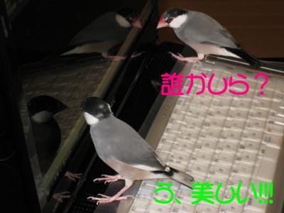 b0158061_20241391.jpg